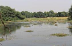 Parque nacional de Sultanpur Imagenes de archivo
