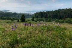 Parque nacional de Sumava fotografía de archivo