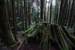 Parque nacional de Taiwan Fotos de Stock Royalty Free