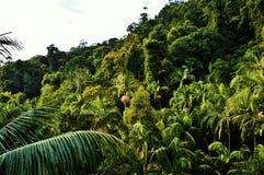 Parque nacional de Tamborine da montagem Imagens de Stock Royalty Free