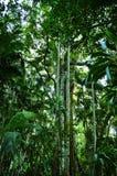 Parque nacional de Tamborine del soporte Imagenes de archivo