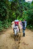 Parque nacional de Tayrona, Colombia Fotos de archivo libres de regalías