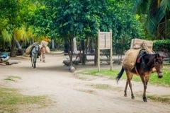 Parque nacional de Tayrona, Colombia fotos de archivo