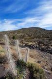 Parque nacional de Teide Fotografía de archivo libre de regalías