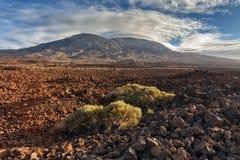 Parque nacional de Teide, Tenerife, Ilhas Canárias, Spain Fotografia de Stock