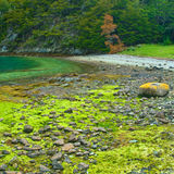 Parque nacional de Tierra del Fuego perto de Ushuaia, Foto de Stock Royalty Free