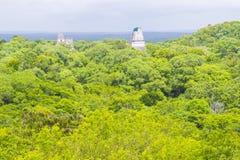 Parque nacional de Tikal Foto de Stock