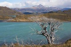 Parque nacional de Torres del Paine foto de archivo libre de regalías
