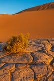 Parque nacional de Vale da Morte das dunas de areia do Mesquite foto de stock