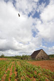 Parque nacional de Vinales Foto de archivo libre de regalías