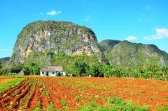 Parque nacional de Vinales, Cuba foto de archivo libre de regalías