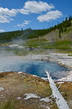 Parque nacional de Waterhole yellowstone Imagem de Stock Royalty Free