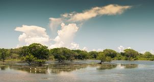 Parque nacional de Yala en Sri Lanka imágenes de archivo libres de regalías