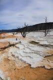 Parque nacional 4 de Yellowstone Imagens de Stock