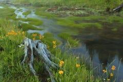 Parque nacional de Yellowstone Foto de archivo libre de regalías