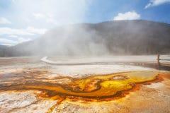 Parque nacional de Yellowstone da bacia do biscoito Imagem de Stock