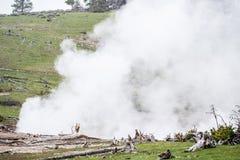 Parque nacional de Yellowstone - paisagem vulcânica do vapor imagem de stock royalty free