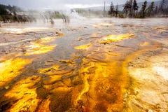 Parque nacional de Yellowstone, Utah, los E.E.U.U. Fotografía de archivo
