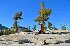 Parque nacional de Yosemite, Califórnia Fotos de Stock Royalty Free