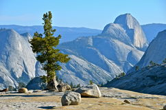 Parque nacional de Yosemite, Califórnia Fotografia de Stock Royalty Free