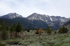 Parque nacional de Yosemite - Califórnia Imagem de Stock Royalty Free