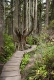 Parque nacional de Yosemite - camino Fotografía de archivo libre de regalías