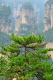 Parque nacional de Zhangjiajie en Hunan, China Foto de archivo libre de regalías