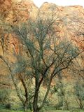Parque nacional de Zion em Utá Fotos de Stock
