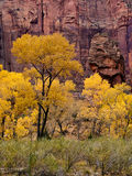 Parque nacional de Zion en caída imagen de archivo libre de regalías