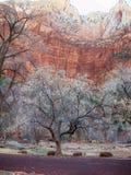 Parque nacional de Zion en Utah foto de archivo