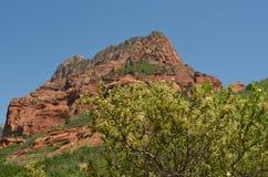 Parque nacional de Zion, Utah Imagen de archivo