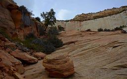 Parque nacional de Zion, Utah, los E Foto de archivo
