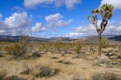 Parque nacional del árbol de Joshua Fotografía de archivo