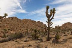 Parque nacional del árbol de Joshua Imagen de archivo