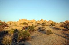 Parque nacional del árbol de Joshua del amanecer Fotos de archivo libres de regalías