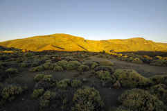 Parque nacional del EL Teide, Tenerife Fotos de archivo