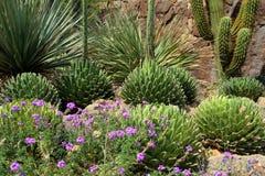 Parque nacional del Saguaro, los E.E.U.U. Fotografía de archivo