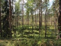 Parque nacional del taitija del ¡de AukÅ (Lituania) Fotografía de archivo