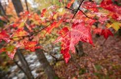 Parque nacional do Acadia no outono foto de stock royalty free