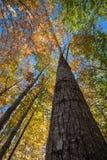 Parque nacional do Acadia no outono imagens de stock royalty free