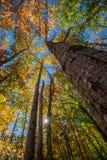 Parque nacional do Acadia no outono fotos de stock