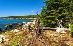 Parque nacional do Acadia foto de stock royalty free