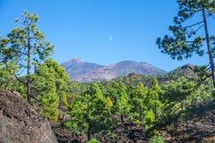 Parque nacional do EL Teide Imagem de Stock