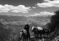 Parque nacional do Grand Canyon Fotografia de Stock Royalty Free
