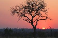 Parque nacional do kruger do por do sol Fotografia de Stock Royalty Free