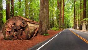 Parque nacional do Redwood imagem de stock