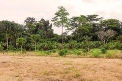 Parque nacional do rio de Cuyabeno, vegatation típico da selva imagens de stock