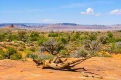Parque nacional dos arcos no panorama do verão com céu azul Fotos de Stock Royalty Free