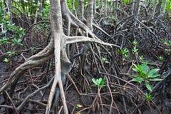 Parque nacional dos manguezais Fotos de Stock Royalty Free