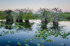 Parque nacional dos marismas foto de stock